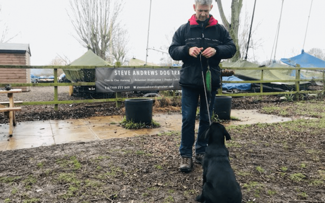 Training your dog – Steve Andrews, Suffolk's highly regarded dog trainer shares some top tips with us…