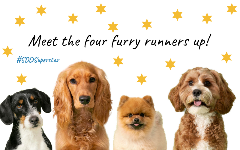 Meet the four furry runners up in Suffolk Dog Day's search for a new Superstar!